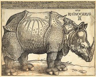 rinoceronte_jpg1
